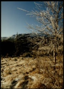 Karkonosze, Srebrne Turniczki (fot.46) [Dokument ikonograficzny]i