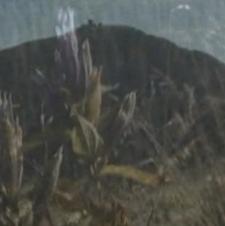 Jelonce i Sudetom: Góry [Film]