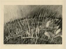 Trawy [Dokument ikonograficzny]
